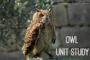 Owl Unit Study – #Homeschooling