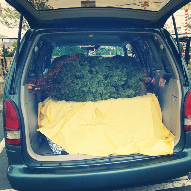 One of the many reasons I love  getting a small tree..it fits perfectly sideways in my van :-)