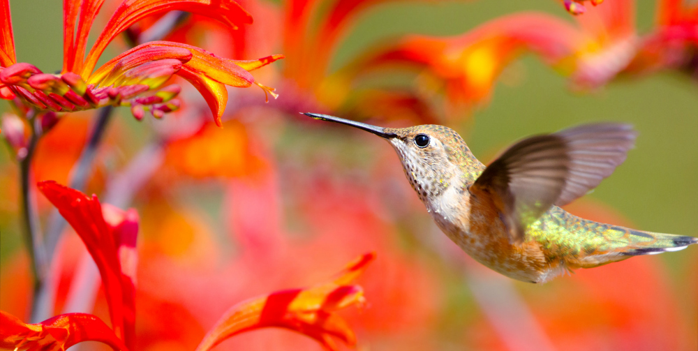 Attract Bees, Butterflies and Hummingbirds to Your Garden