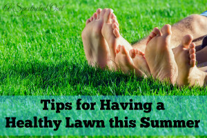Tips for Having a Healthy Lawn this Summer